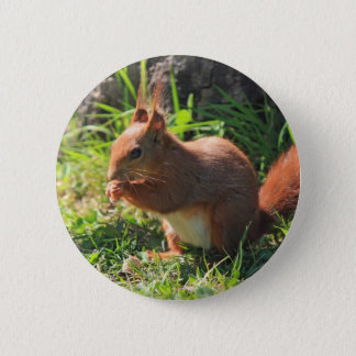 Squirrel red beautiful photo button, pin