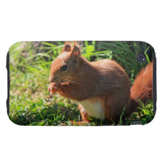 Squirrel red cute iphone 3G case mate tough iPhone 3 Tough Cases