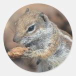 squirrel round sticker
