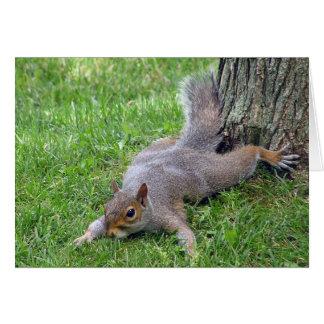 Squirrel Splat Greeting Card