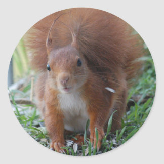 Squirrel squirrel Écureuil - Jean Louis Glineu Classic Round Sticker
