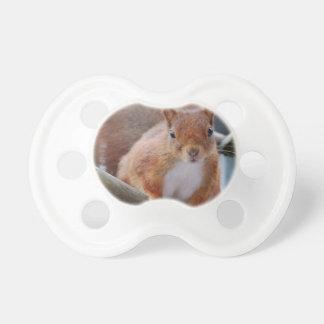 Squirrel squirrel Écureuil - Jean Louis Glineu Dummy