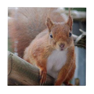 Squirrel squirrel Écureuil - Jean Louis Glineu Tile