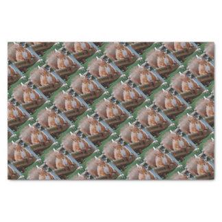 Squirrel squirrel Écureuil - Jean Louis Glineu Tissue Paper