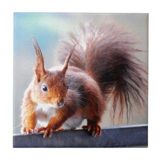 Squirrel squirrel Écureuil Tile