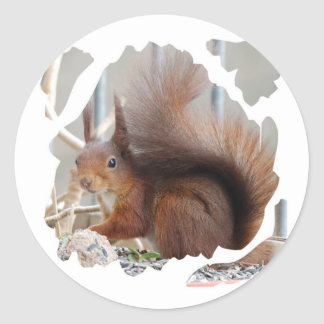 SQUIRREL SQUIRRELS ÉCUREUIL CLASSIC ROUND STICKER