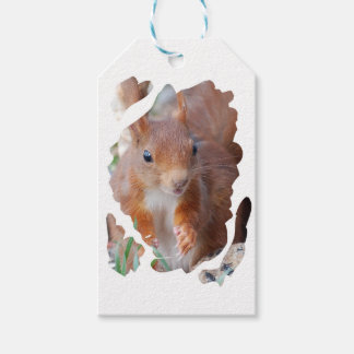SQUIRREL SQUIRRELS ÉCUREUIL GIFT TAGS
