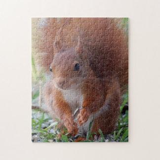 Squirrel ~ squirrels ~ Écureuil Jigsaw Puzzle