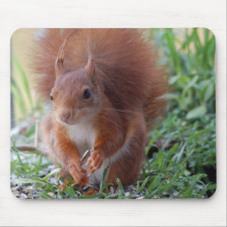 Squirrel ~ squirrels ~ Écureuil Mouse Pad