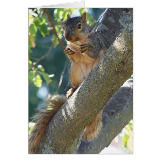 Squirrel, Thinking Of You Card