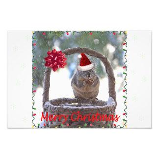 Squirrel Wearing Santa Hat Photo Print