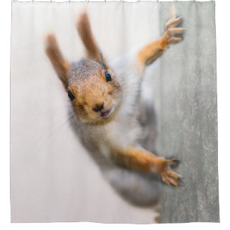 Squirrel - Who Are You Shower Curtain