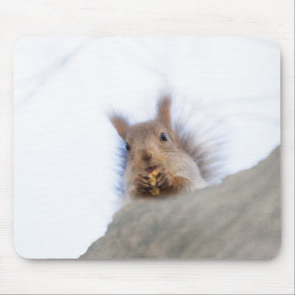 Squirrel with a walnut mouse pad