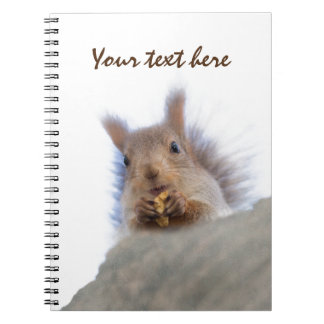 Squirrel with a walnut notebooks