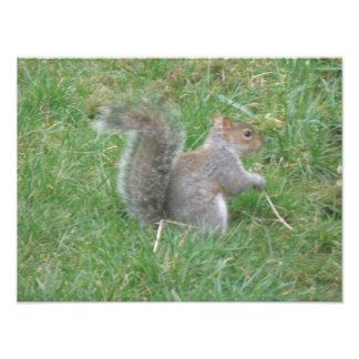 Squirrel with Curly Tail Photo Print