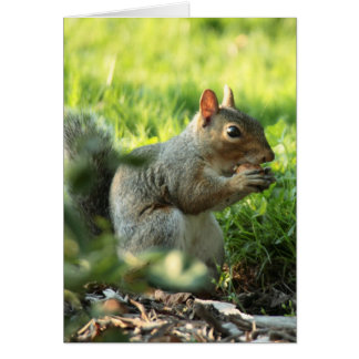 Squirrel With Nut 1 Cards