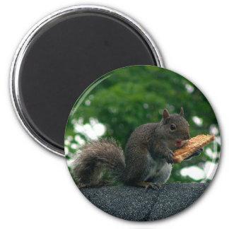 Squirrel with peanut butter sandwich 6 cm round magnet