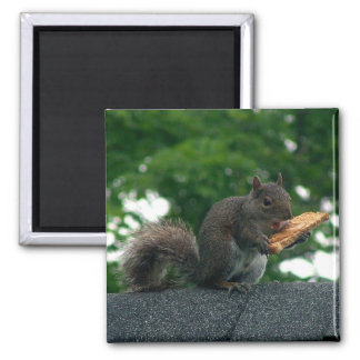 Squirrel with peanut butter sandwich square magnet