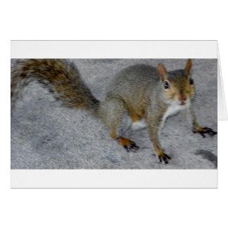 squirrels matter.JPG Card