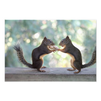 Squirrels Sharing a Peanut Photo