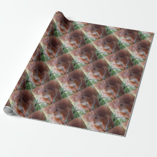 Squirrels Squirrel/photo: Jean Louis Glineur Wrapping Paper