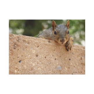 Squirrely Greetings Canvas Print