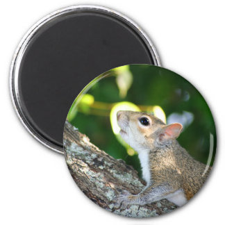 Squirrely! magnet