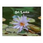 Sri Lanka Water Lily