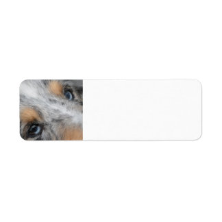SS Blue Merle White and Tan Eyes lable Return Address Label