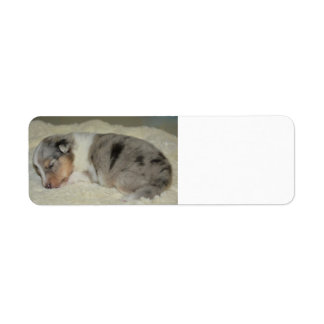 SS Blue Merle White and Tan  puppy label
