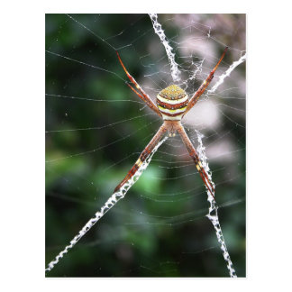 St Andrews Cross Spider Postcard