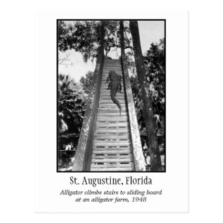 St. Augustine retro alligator Postcard