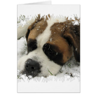 St Bernard Dog Greeting Card