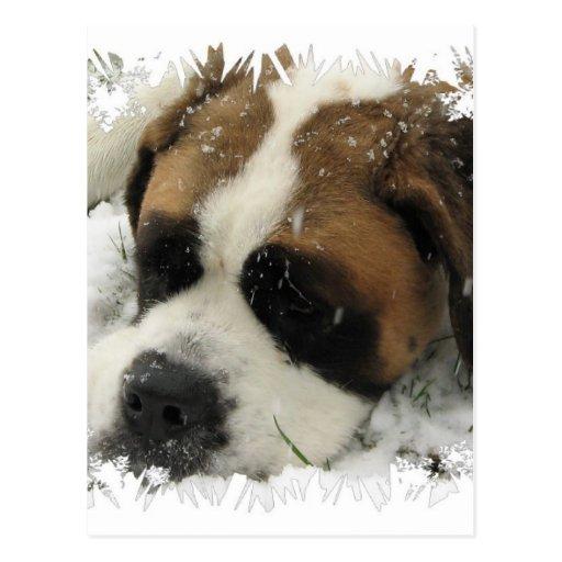 St Bernard Dog Postcard