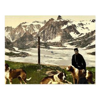 St. Bernard dogs, Valais, Alps of, Switzerland cla Post Card