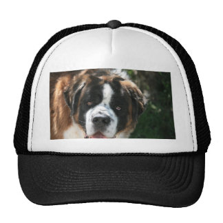 St. Bernard Mesh Hat