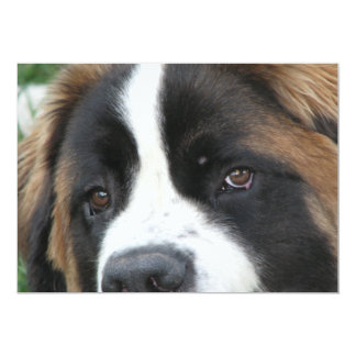 St Bernard Puppies Invitation