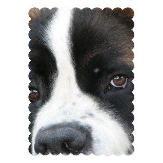 St Bernard Puppies 13 Cm X 18 Cm Invitation Card