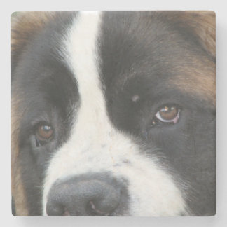 St Bernard Puppies Stone Coaster
