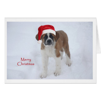 St Bernard Puppy Christmas Card