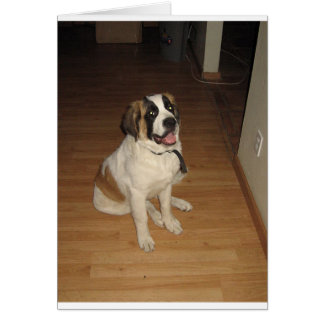 st bernard sitting card