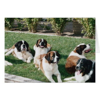 St. Bernards in the Yard Card