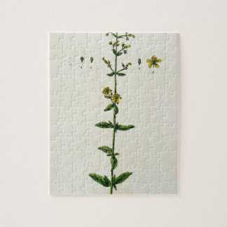 St. John's Wort, plate 15 from 'A Curious Herbal', Jigsaw Puzzle