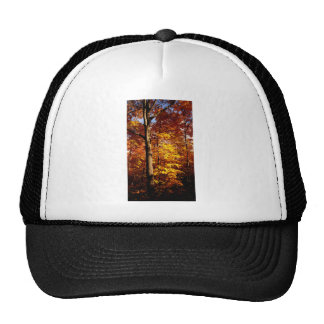 St Joseph Island Sugar Maples Cap