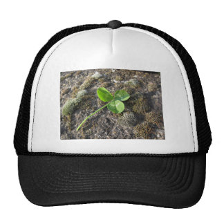 St. Patrick's Day background . Clover on the rock Cap