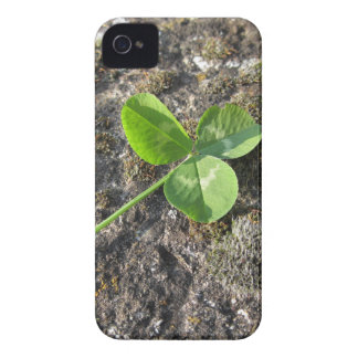 St. Patrick's Day background . Clover on the rock iPhone 4 Case