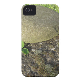 St. Patrick's Day background with clover shamrock iPhone 4 Case
