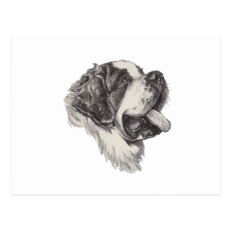 St Saint Bernard Dog Charcoal Art Drawing Postcard