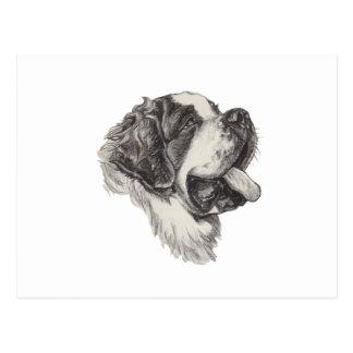 St Saint Bernard Dog Charcoal Art Drawing Postcard