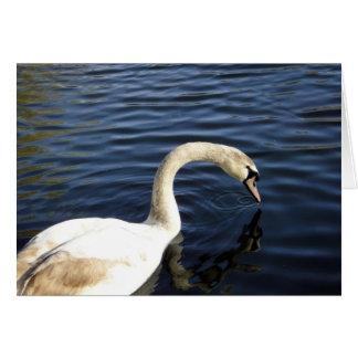 st. stephen's swan card